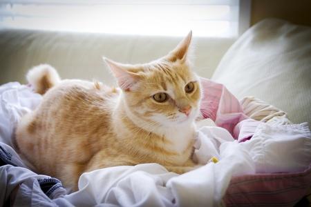 gato atigrado: Peque�o gato atigrado Foto de archivo