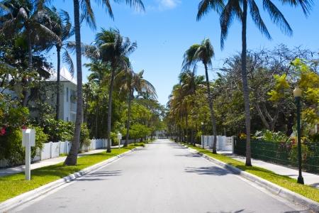 garden key: Street with Palms Stock Photo