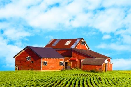 American Countryside Milk Farm photo