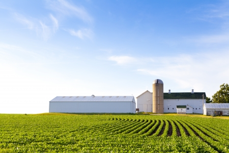 agriculture industry: American Country Farm With Blue Sky