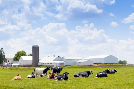 agricultural farm land: Milk Farm