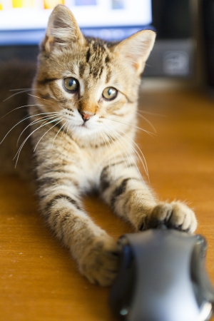 Cat with Mouse photo