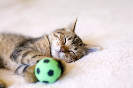 Kitty With Football Ball photo