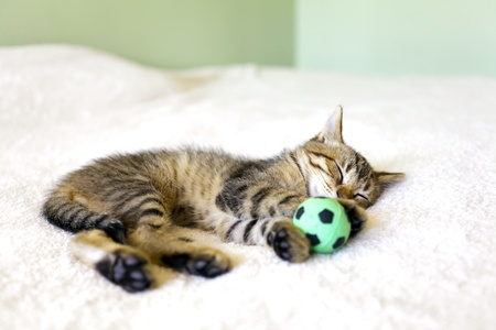 Kitty With Football Ball photo
