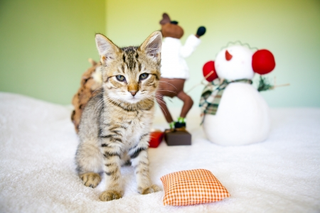 Kitty With Christmas Decoration photo