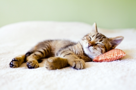 Kitty Nap Stock Photo