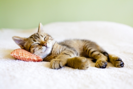 valentine cat: Kitty Nap Stock Photo