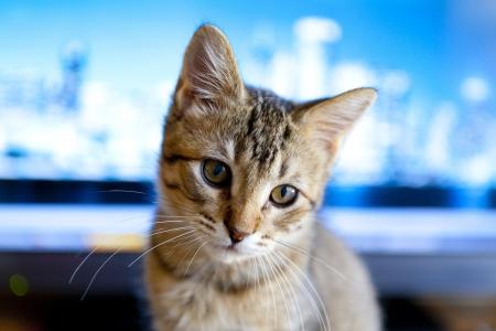 Business Kitty photo