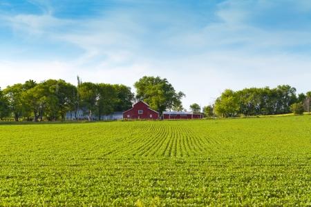 ingenuity: American Farmland With Blue Sky