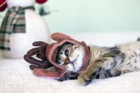 baby xmas: Small Cat