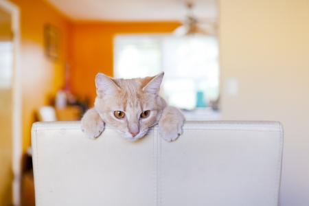 얼룩 고양이 가구를 긁적 스톡 콘텐츠