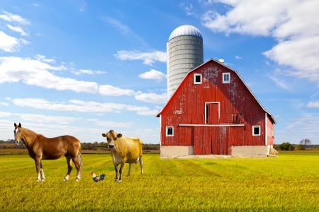 working animal: American Countryside Red Farm With Blue Sky Stock Photo