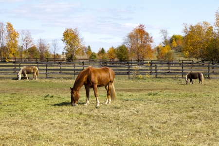 Brown Horse on American Countryside photo