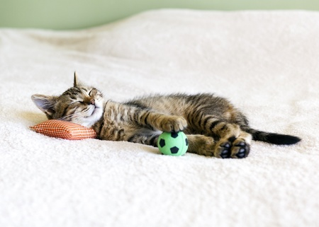 Small Kitty With Red Pillow And Soccer Ball Imagens - 17097017