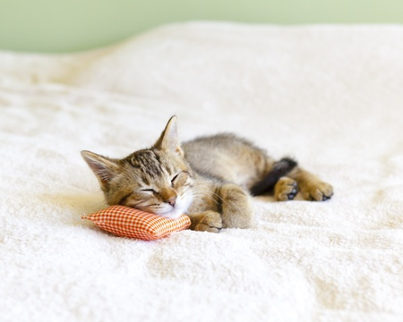 Small Kitty With Red Pillow  photo