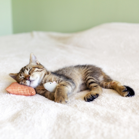 Small Kitty With Red Pillow and Mouse photo
