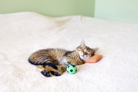 Small Kitty With Red Pillow And Soccer Ball  photo