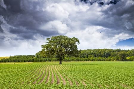iowa agriculture: American Countryside  With Cloudy Sky