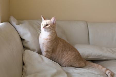 sofa: Small Cat  Stock Photo