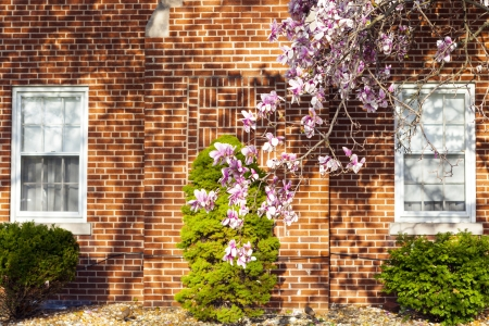 Spring in suburbs photo