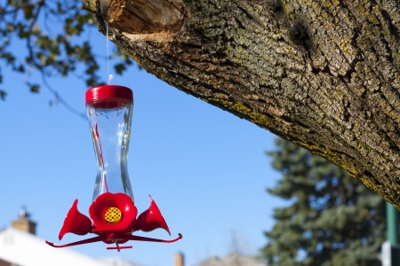 bird feeder Фото со стока