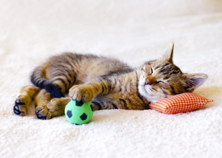 Kitten sleeping on a pillow with a soccer ball
