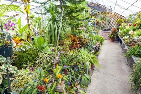environmen: Inside Greenhouse