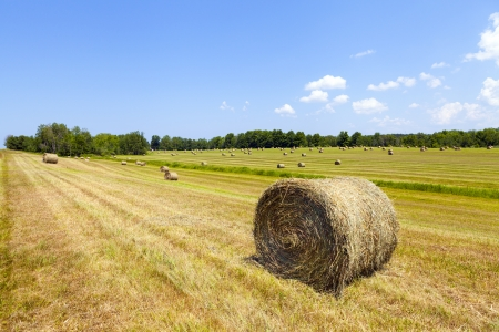 bounds: American countrysidelandscape with bundles of hay