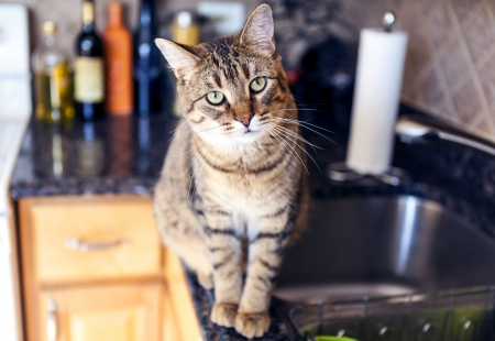Young Cat In The Kitchen photo
