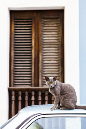 Cat on San Juan Streets photo