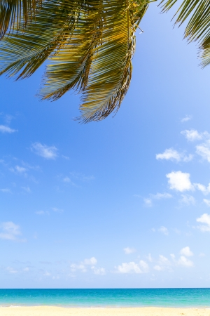 Hot Tropical Beach With Blue Sky photo