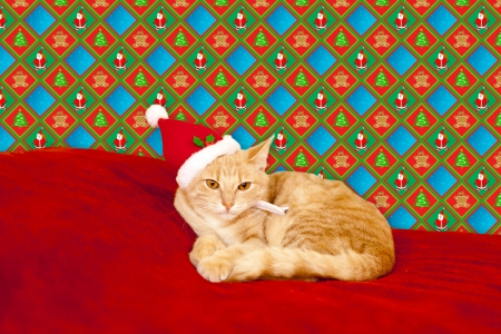 lying in: Young cat in a Christmas setting, lying on the bed