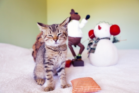 Young cat in a Christmas setting, lying on the bed photo