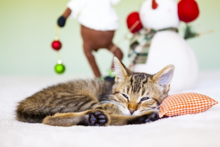 Young cat in a Christmas setting, lying on the bed   Imagens