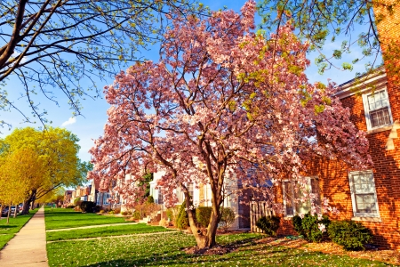 suburbs: Spring in suburbs