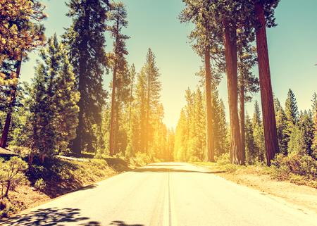 Sequoias in California 版權商用圖片