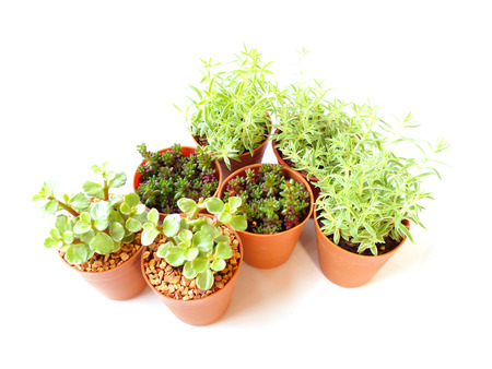 collection of little houseplant in a pot over white background Stock Photo