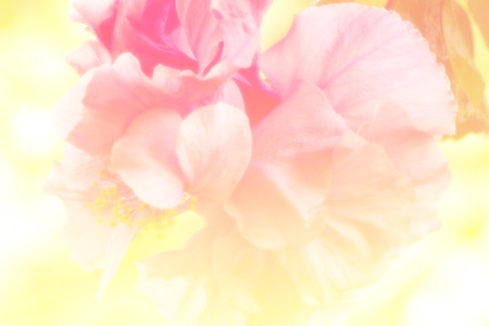 colorize: beautiful flowers made with color filters romantic flowers background