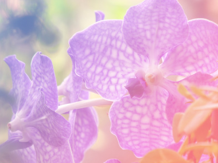 colorize: beautiful orchid background made with color filters Stock Photo