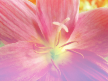 fleurs romantique: beautiful flowers made with color filters romantic flowers background