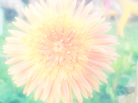 colorize: beautiful flower background flowers made with color filters Stock Photo
