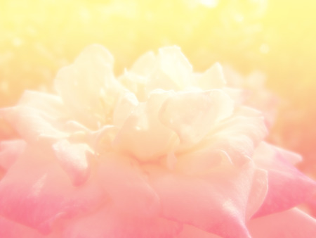colorize: beautiful roses background made with color filters
