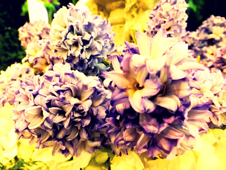 colorize: beautiful bouquet flower with color filters Stock Photo