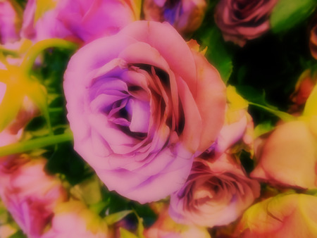 colorize: beautiful roses made with color filters