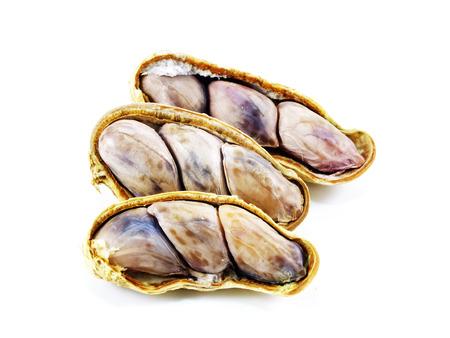 goober: peanut on white background