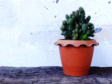 cactus in pot on wooden table top view Stock Photo