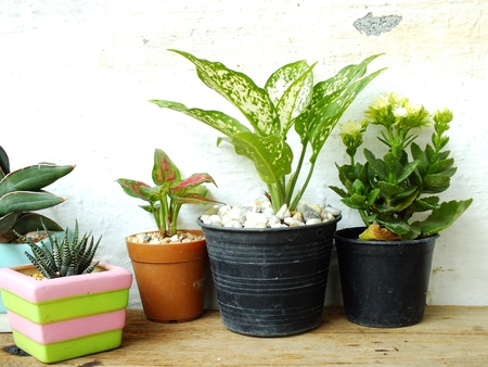 still life natural house plants on wooden background texture with space copy Stock Photo