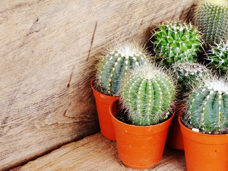 cactus collection in small flower pots on wooden background