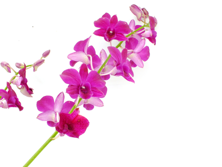 beautiful orchid bud isolated on white background