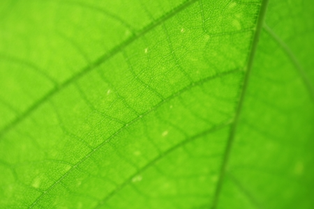 close up on green leaf texture background